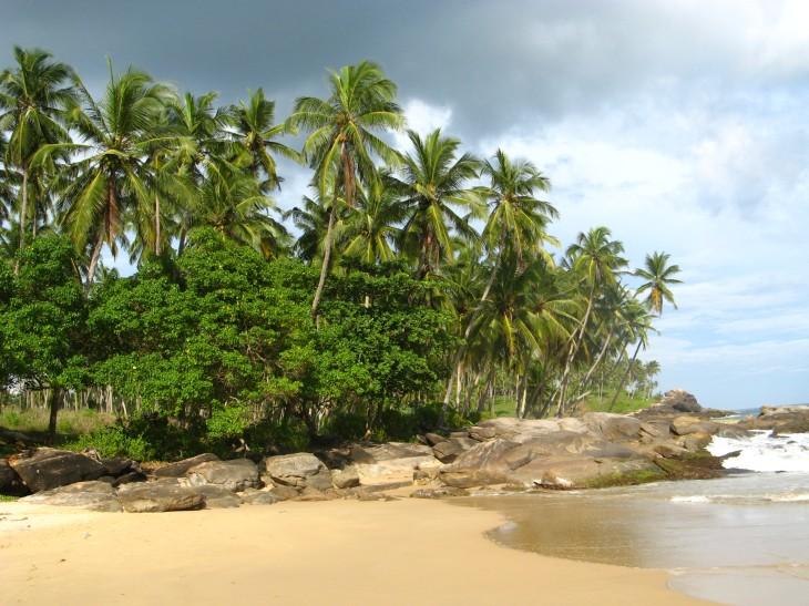Palm Paradise Bay